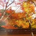 Photos: 錦秋の佛通寺@参道の紅葉