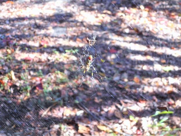 写真: クモの巣注意@稜線の山道@瑠璃山