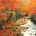 写真: 飛猿橋の秋@佛通寺川のせせらぎ