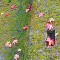 写真: 苔むすモスグリーンな境内@晩秋の佛通寺