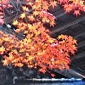 写真: 地蔵堂の秋@備後路・佛通寺