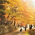 写真: 巨蟒橋(きょもうきょう)の紅葉@古刹・佛通寺