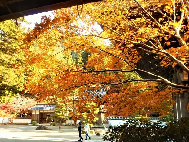 Photos: 大方丈の秋@佛通寺