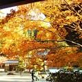 写真: 大方丈の秋@佛通寺