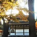 写真: 仏殿の秋@佛通寺