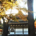 Photos: 仏殿の秋@佛通寺