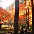 Photos: 錦秋の佛通寺@参道の秋