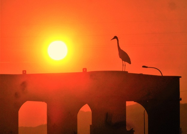 新春の夕陽とアオサギ@瀬戸内海