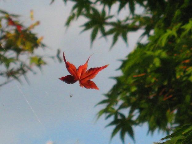 写真: ムササビの飛ぶが如く