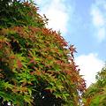 写真: うっすらと少し紅葉