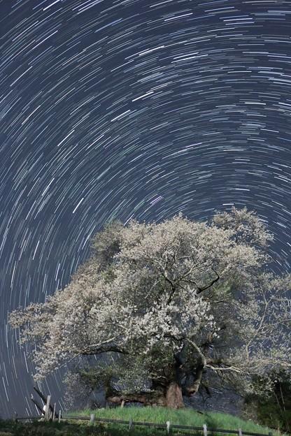 写真: 彼岸桜と星の軌跡