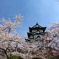 写真: 古城之櫻