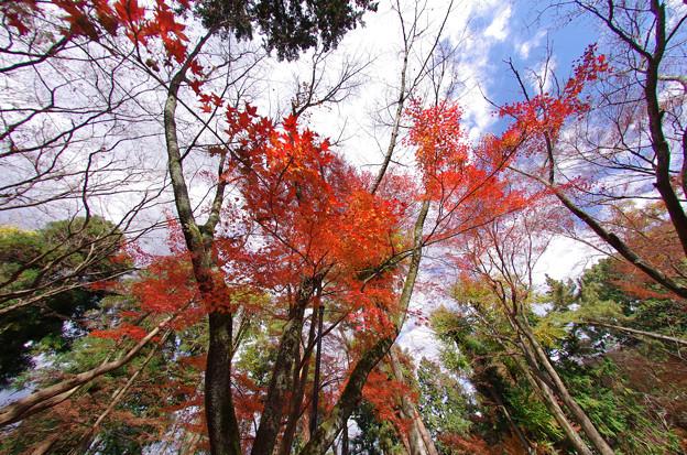 南禅寺の紅葉7(紅葉が降る空)