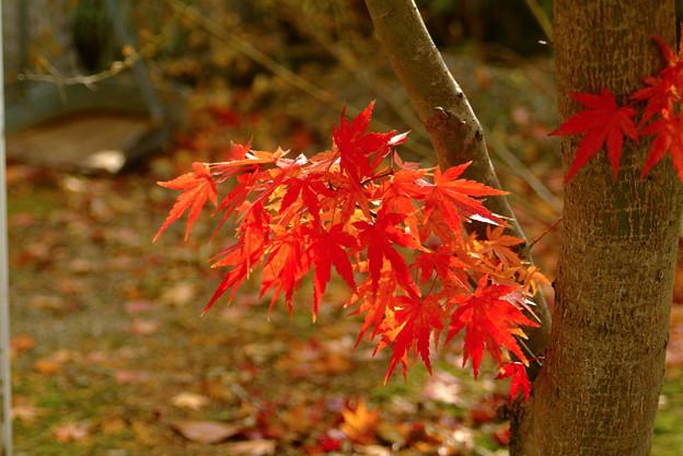 南禅寺の紅葉9