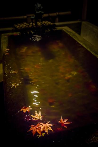 飄落在手水舍的楓葉