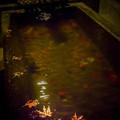 写真: 飄落在手水舍的楓葉