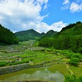 Photos: 棚田の風景 四谷千枚田にて