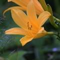 幸せの黄色い花