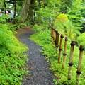 写真: 軽井沢の小径