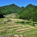写真: 棚田の風景