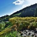 写真: 棚田 秋の風景