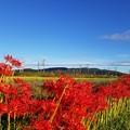 写真: 秋空のもと