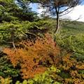 北八ヶ岳の紅葉