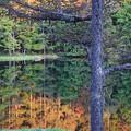 秋の色を映す水鏡の池