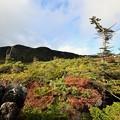 山頂の自然