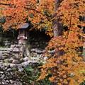 写真: 古からもこの場所で紅葉をみる