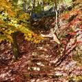 写真: 落ち葉の階段