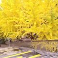黄色がいっぱい