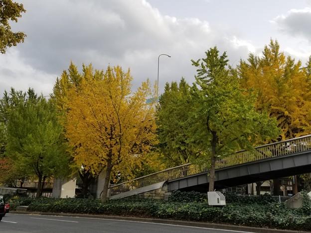 黄緑と黄色