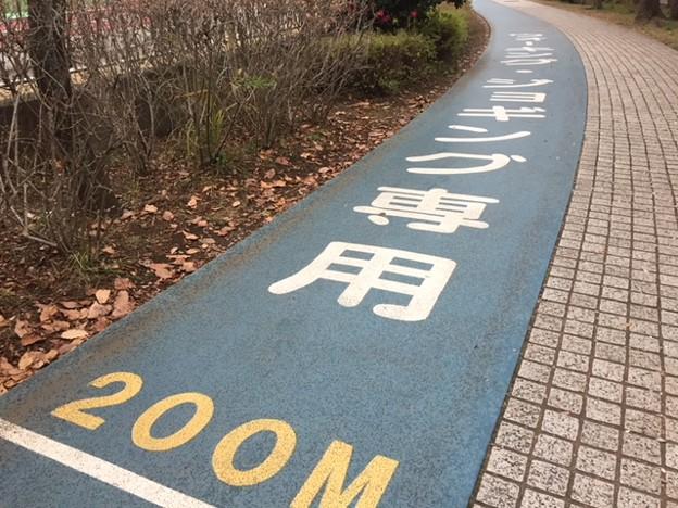 お散歩コース
