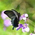 写真: 蝶飛来