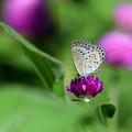 写真: 花壇に集う 1