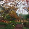 初冬午後の木漏れ日