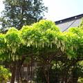 写真: 福善寺