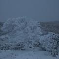 阿蘇の雪景色1