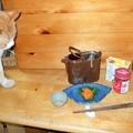 写真: コゾとホヤの塩辛
