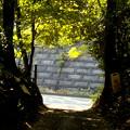 森の出入口