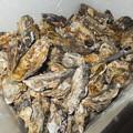 石巻の牡蠣
