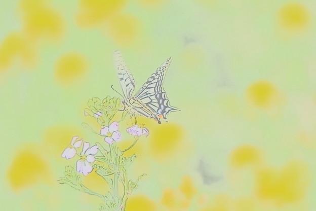 蝶_公園 D3612