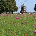 写真: 風車と_公園 D5266