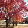 写真: 紅葉_公園 F0904