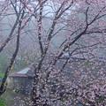 Photos: 春雨の山家