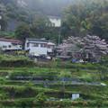 Photos: 山里に慈雨
