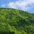 Photos: 山は緑