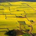 Photos: 羅平の畑