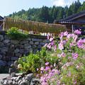 Photos: 村の風景